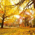【月刊トレンドネイル】「秋のお出かけ」ネイル〜AYOMOT編〜