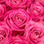 ネイルの色で印象が変わる?ピンクの効果を徹底分析